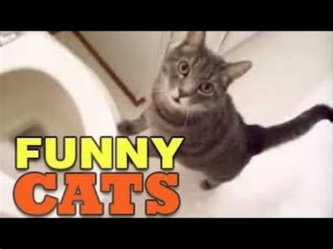 Funny Cats Vines  Funny Videos Compilation 2014 Hd