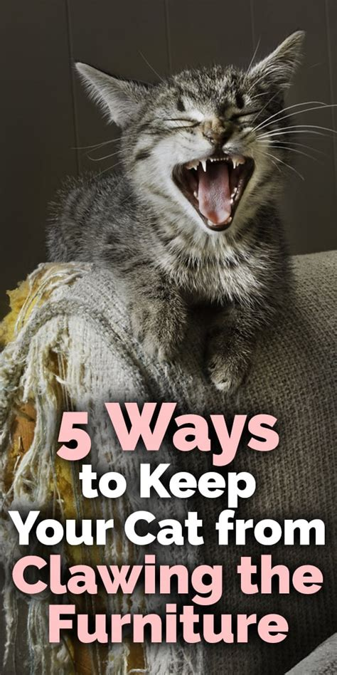 ways    cat  clawing  furniture