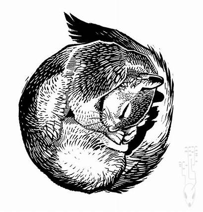 Squirrel Sleeping Tattoo Curled Clipart Sleep Coloring