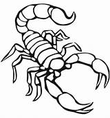 Scorpion Coloring Pages Printable Animals Scorpions Preschool Traceable Animal Drawing Invertebrate Sting Ready Worksheets Crafts Ide Kindergarten sketch template
