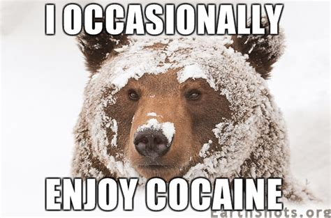 Bear Cocaine Meme - cocaine snowman occasionally enjoy cocaine bigg pz pinterest humor and memes