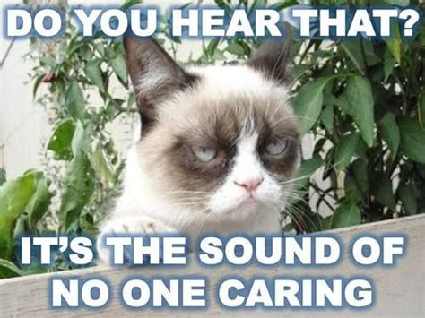 Angry Cat Good Meme - 16 best cat quotes images on pinterest funny animal funny animals and adorable animals