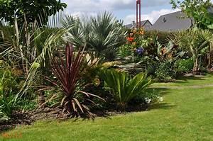 Palmen Für Den Garten : winterharte palmen f r den garten yucca rostrata sehr sch ne winterharte palmen f r den 5 ~ Sanjose-hotels-ca.com Haus und Dekorationen