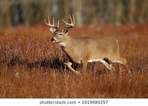 Santa Coupons Deer Images Stock Photos Vectors Shutterstock