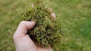 Moos Im Rasen Beseitigen : test von vertikutierern alle haben dasselbe problem ~ Lizthompson.info Haus und Dekorationen