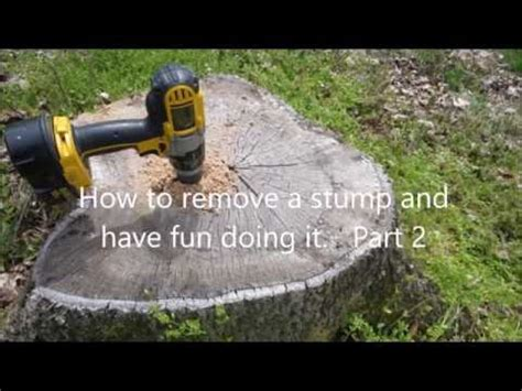 How To Remove A Tree Stump Using Epsom Salt Doovi