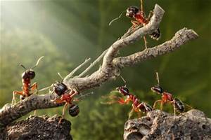 Ameisen Auf Der Terrasse : ameisen auf der terrasse bek mpfen so geht 39 s ~ Lizthompson.info Haus und Dekorationen