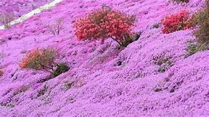 fleurs roses des champs With tapis champ de fleurs avec bobochic avis canapé