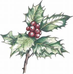 How to Paint and Draw Holly for Christmas Cards with