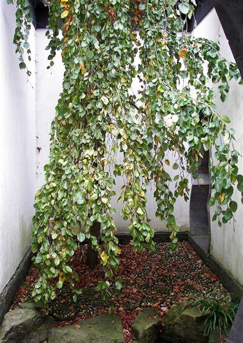 Botanischer Garten Witten by Dortmund Herne Bochum Tagestouren Sehensw 252 Rdigkeiten