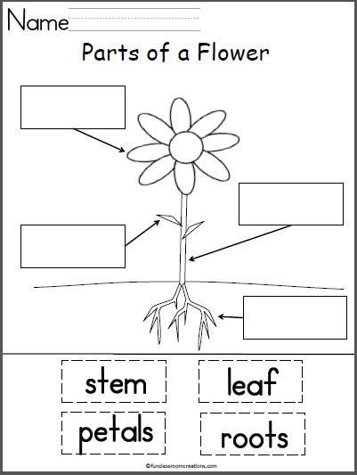 parts of a flower preschool ideas parts of a flower 731 | f51fb9d808eb874a1dea9fd7c007f522