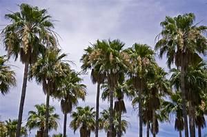 palm tree   thewallgalleryblog