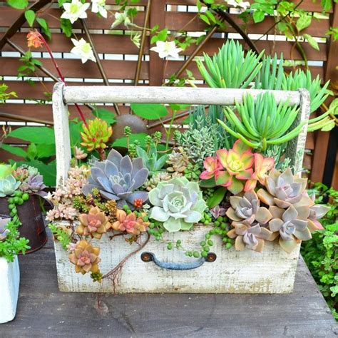 indoor  outdoor succulent garden ideas shelterness