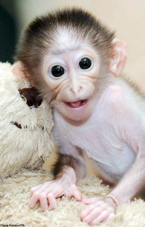 image gallary  beautiful smiling monkey pictures baby