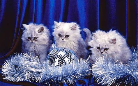 Animated Kitten Wallpaper - free kittens wallpapers wallpaper cave