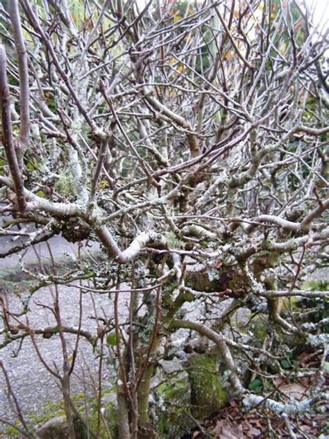 pruning apple trees in autumn 16 best images about garden on pinterest gardens backyard waterfalls and sprinkles