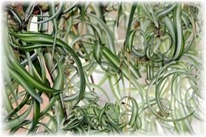 Pflanzen Die Wenig Licht Brauchen Heißen : 5 ungiftige zimmerpflanzen f r katzen geeignet ~ Lizthompson.info Haus und Dekorationen