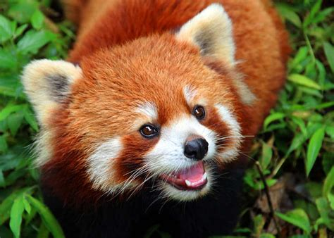 35 Most Colorful Animals in the World (Mammals Birds