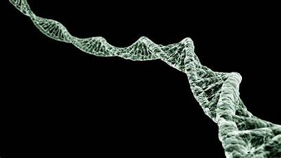 Dna Digital Helix Wallpapers Double Tube 3d