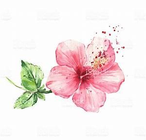 Hibiscus Flower Watercolor Painting Stock Vector Art ...