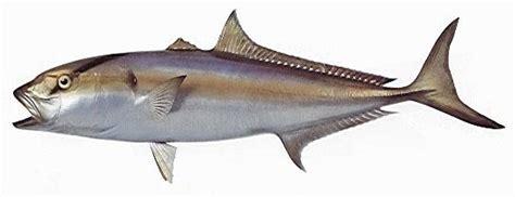 kona deep sea fishing pacific game fish types