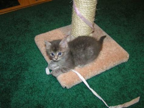 declawing cats  cruel  unnecessary