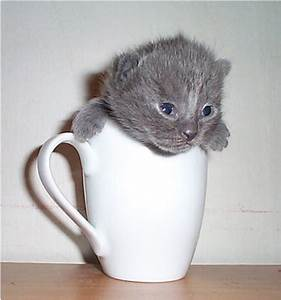 1000+ images about Cats in Cups on Pinterest | Cute cats ...