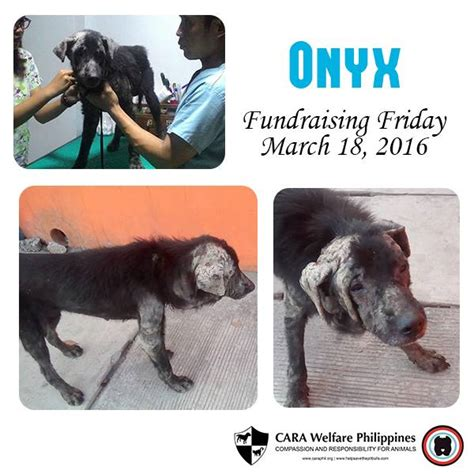 welfare philippines blog archive onyxs complete