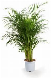 Grande Plante Verte D Intérieur : plante verte d int rieur facile d entretien photos de magnolisafleur ~ Voncanada.com Idées de Décoration