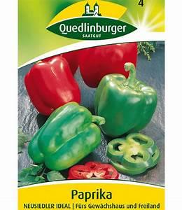 Paprika Pflanzen Abstand : paprika 39 neusiedler ideal 39 jetzt online bestellen baldur garten ~ Whattoseeinmadrid.com Haus und Dekorationen