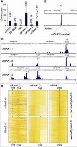 Identification Of M5c In Noncoding Rnas