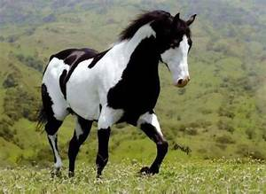 Black & White Horse #Breathtaking | Beautiful Animalz ...