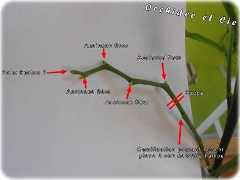 tailler une orchidee en pot entretenir phalaenopsis orchid 233 e et cie