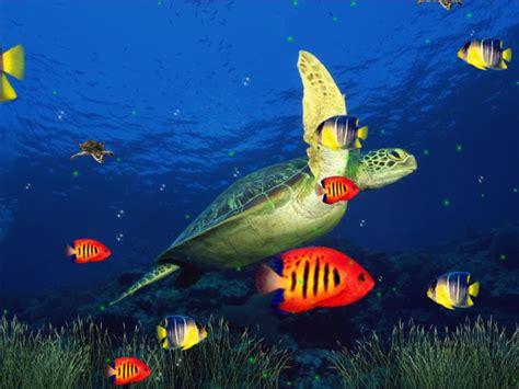 do you mind using these marine aquarium 3d