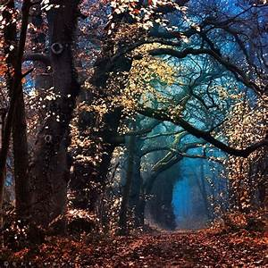 Mystic Forest. The Netherlands   Places I want to visit ...