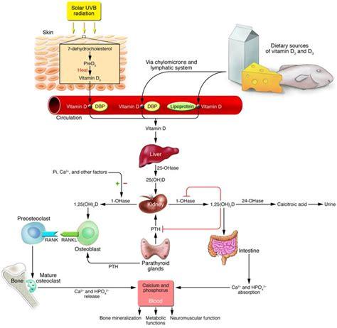 Skin, care tip Of The week diy vitamin c serum