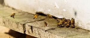 Se Débarrasser Des Guepes : comment se d barrasser d un nid de gu pes la maison ~ Melissatoandfro.com Idées de Décoration