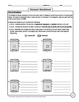 Osmosis And Tonicity Worksheet By Athomic Science Tpt