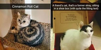 Cats Cat Funny Snapchats Really Hilarious