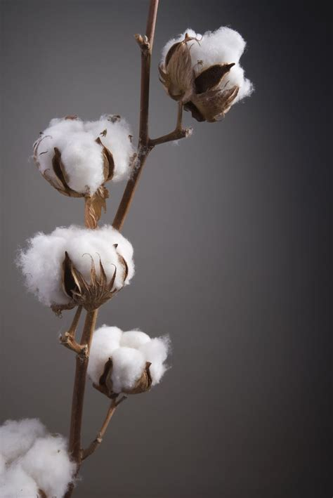 25 unique cotton ideas on pinterest cotton decor