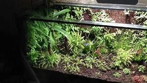 Pflanzen Terrarium Einrichten : karnivoren terrarium 8 2012 youtube ~ Watch28wear.com Haus und Dekorationen