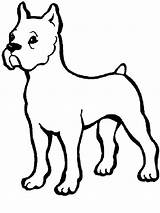 Boxer Coloring Dog Pitbull Puppy Dogs Printable Template Button Through Sheet Getcolorings Could Grab Tocolor Sketch sketch template