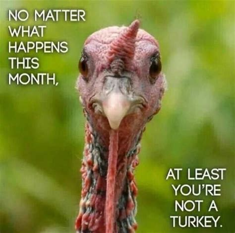 funny turkey pics ideas  pinterest funny