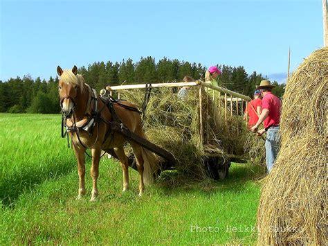 hay horses dried barn taken well stook