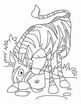 Coloring Zebra Printable African Zebras Colouring Children Colors Library Clipart Clip Passover Popular Forget Horses Several Different Similar Bible sketch template