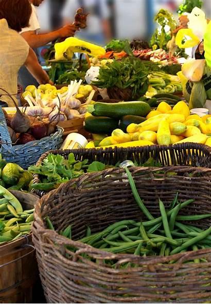 Farm Hydroponic Produce Local Selling Garden Market