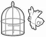 Cage Coloring Bird Template Larger Credit sketch template