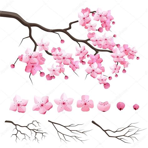 Vector: rama de cerezo de Rama de cerezo de sakura de