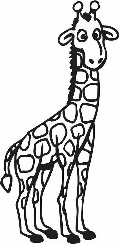Giraffe Coloring Pages Girafe Sheets Dessin Cartoon