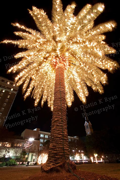 palm tree decorated  christmas lights holiday marion